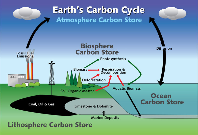 Earths Carbon Cycle.jpg